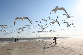 Running on a beach, with birds