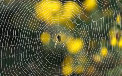 spider-web-2